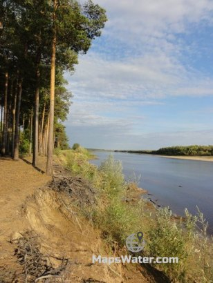 Сосновый лес у Тагильцов