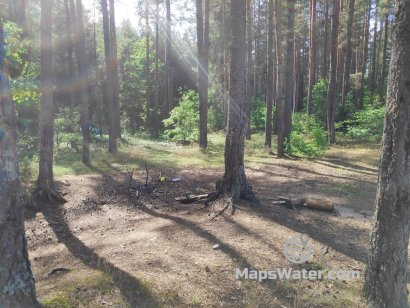 Шишки в лесу